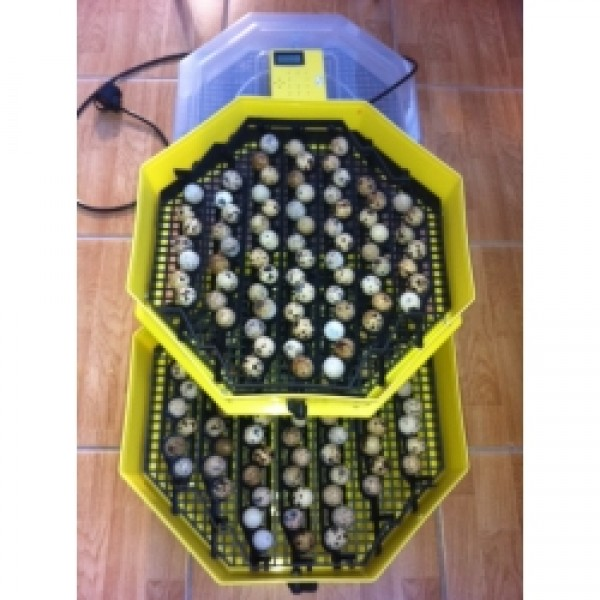 Clocitoare Incubator Cleo 5x2 DTH cu dispozitiv de alimentare cu apa