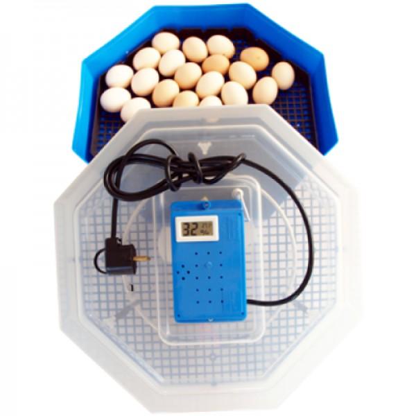 Incubator electric Cleo 5 TH